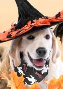 Halloween Pet Photo