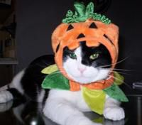 Pumpkin Kitty