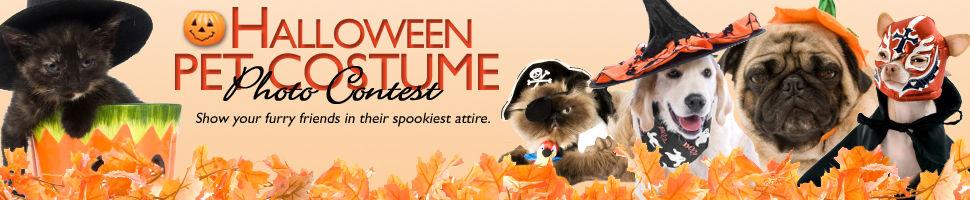 Halloween Pet Photo 2012