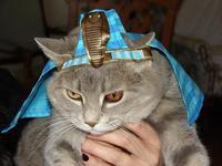 Ariel the Pharaoh