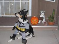 Batman Virginia Ann Kovac