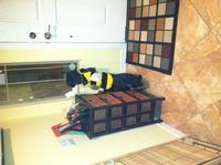 Bee curious!