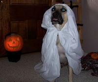 Bonnie as a Ghost for Halloween!