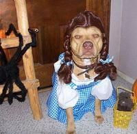 Chulupa as 'Dorothy' for Halloween