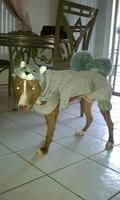 Coco the Squirrel