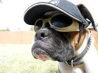 Cool Dawg!