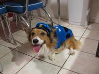 Corkey the Cop