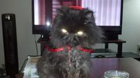 Dracula Kitty (Izzy)