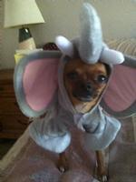 Little Mighty Roxy