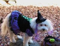MOLLY-The Whimsical Witch of 2010