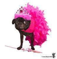 Nugget the Fairy Princess