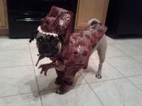 Pug Raptor