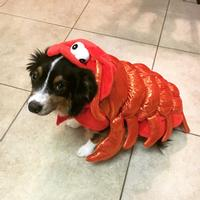 The happy lobster