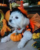 Zoe's First Halloween