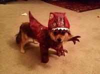 'Ruff' Raptor